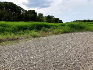 犬上川コアユ釣り河原の草