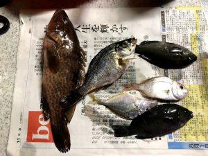 小浜港豆アジ釣り